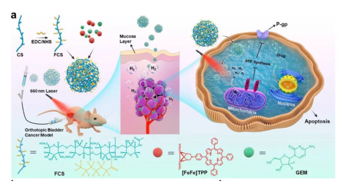 光氢改善,有效改善膀胱癌有效!