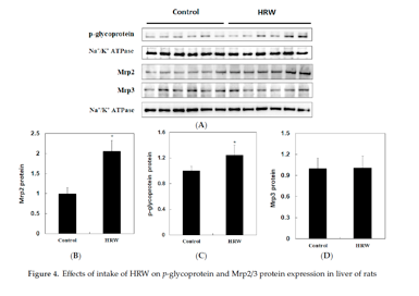 氢水和肝脏解毒研究细节